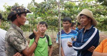 Chủ các dự án tham quan dự án trồng nho xanh của Hoàng Quý Vương (đội mũ, bên phải), tỉnh Ninh Thuận